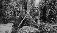 Puget Sound area man and woman in hop fields, Washington, ca. 1890-1895.
