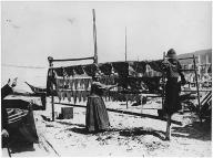Makah woman hanging catch on drying racks on beach at Neah Bay, Washington, ca.1895