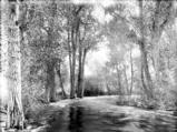 San Poil River, west of Republic, Washington, ca. 1908