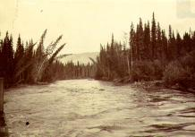 Macmillan River, from the steamboat PROSPECTOR, Yukon Territory, August 1901.