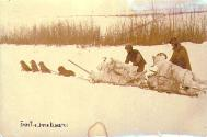 Dogsled team carrying mountain sheep carcasses from the upper Klondike to Dawson, Yukon Territory,...