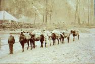 Train of pack horses taking supplies to the mines, Yukon Territory, ca. 1898.