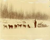 Hunter en route to Dawson hauling moose meat with dogsled team on the frozen Klondike River, Yukon...