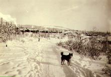 Dog on trail with cabins in snow, Dawson, Yukon Territory, ca. 1901.