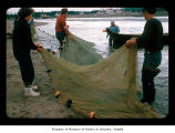 Men and women with a fishing net on a beach on the Quileute Indian Reservation
