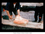 Salmon preparation on the Quileute Indian Reservation