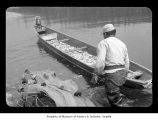 Man with fishing net and canoe loading with captured fish on the Quileute Indian Reservation