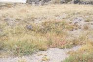 Tephra impact recovery at Butte Camp (1998)
