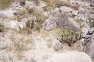 Tephra impact recovery at Butte Camp (1988)