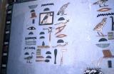 Painted Heiroglyphs from Tombs of Nobles