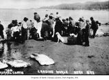 Native Americans cutting whale meat on the beach at Neah Bay