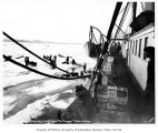 View from aboard the Steamship Steamer CORWIN off of Nome showing dogsled teams on ice hauling...