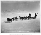 United States Mail dogsled team, Nome, April 8, 1906