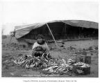 Eskimo woman stringing cod with umiak in background, Nome, 1904