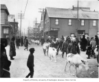Elks Club Day parade with reindeer in procession, Nome, January 10, 1908
