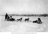 Dogsled team and passengers, Nome, March 1901