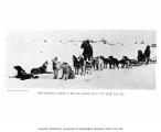 Dogsled team returning from hunting expedition, ca. 1906