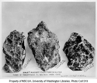 Gold nuggets, Alaska, ca. 1904