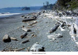 Beach with driftwood, Olympic National Park, date unknown