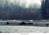 Hoh River near Olympic National Park campground, date unknown