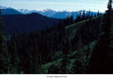 Hurricane Ridge seen from Mount Angeles, Olympic National Park, date unknown