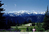 Hurricane Ridge Meadow and the Olympic Mountains, Olympic National Park, date unknown