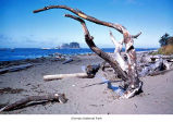 Beach with driftwood on Cape Alava, probably in Olympic National Park, date unknown