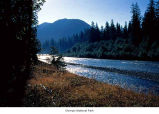 Hoh River, Olympic National Park, date unknown