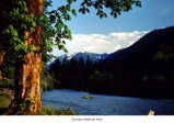 Quinault River, East Fork, , Olympic National Park, date unknown