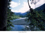 Quinault River North Fork, Olympic National Park, date unknown