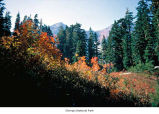 Trees and shrubs in the Olympic Mountains, probably during autumn, Olympic National Park, date...