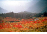 Meadow in the Olympic Mountains, probably during autumn, Olympic National Park, date unknown