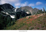 Mount Appleton and a nearby meadow, probably during autumn, Olympic National Park, date unknown