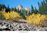 Douglass maples in the Olympic Mountains, probably during autumn, Olympic National Park, date...