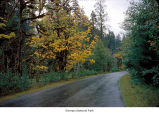 Hoh Road, probably during autumn, Olympic National Park, date unknown