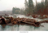 Hoh River showing logs washed out of the river, probably in Jefferson County, date unknown