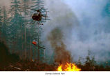 Fire fighting with a helicopter, probably in Olympic National Park, date unknown