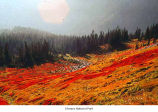 Meadow in fall, Olympic National Park, date unknown