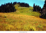 Hurricane Ridge Meadow, Olympic National Park, date unknown