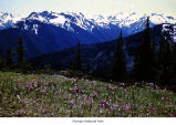 Subalpine meadow in Deer Park, Olympic National Park, date unknown