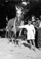 Boy with horse ridden by the standard bearer at Alkar Festival, Sinj, Croatia (former Yugoslavia),...