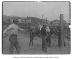 U.S. government military corral in north Seattle showing men breaking in mule, August 1900