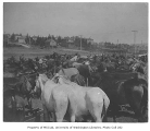 U.S. government military corral in Seattle showing pack mules, August 14, 1900