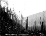Index Galena Co. logging operation, Index, ca. 1913