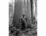Glen Austin standing in front of a big cedar, ca. 1930
