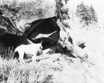 Hunter and mountain goat, Cascade Mountains, ca. 1930