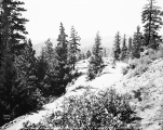 View vicinity of Lookout Point, Blewett Pass, ca. 1930