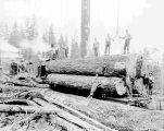 Logging operations of the Miller Logging Company near Sultan, ca. 1930