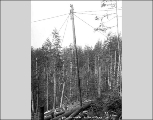 Logger atop gin pole, Snohomish County, ca. 1913