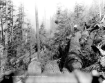 Felled trees, Woods Logging Company, Miller River, ca. 1931